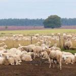 BoerenBed Hoeve Meijer