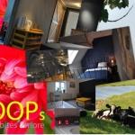JOOPs beds, bites &more